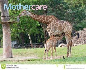 Compra  leche bebé jirafa para tu pequeño