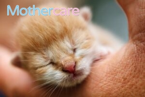 Los Mejores leche polvo bebé 6 meses gatitos para tu niño